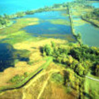 Navaree_marsh_798_normal