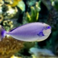 Tropical-fish-1408369971r38_normal