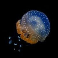 Jellyfish-1375107297afb_normal