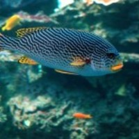 Tropical-salt-water-fish_normal