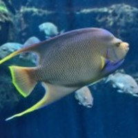 Tropical-saltwater-fish_normal